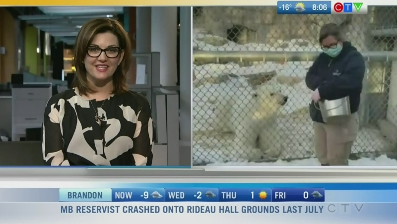 Star the polar bear is more than 7 years old and likes to be alone. Rachel Lagacé has more on what Star likes to eat and do.