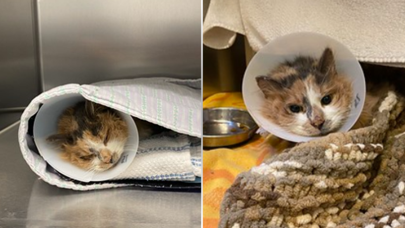 The Ottawa Humane Society says Gerda had to have its tail and leg removed after being found frozen three weeks ago. (Photo courtesy: Ottawa Humane Society)