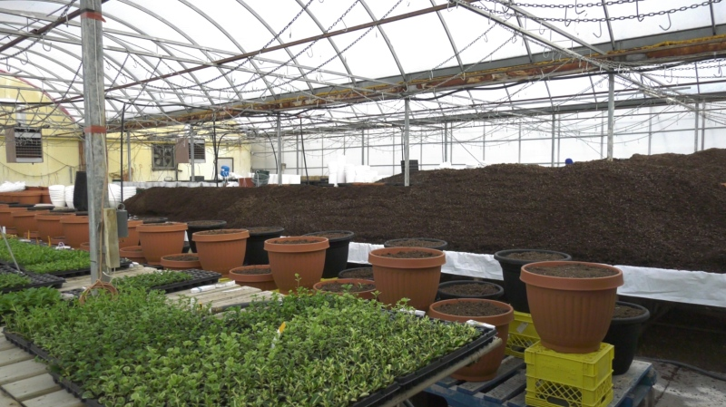 Young's Plant World in Yorkton is already fielding customers looking to get started on their gardens. (Kaylyn Whibbs / CTV News Yorkton)