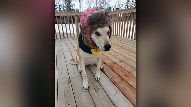 Minnie said she is so ready for winter to be over. Photo by Brittney Ferland.