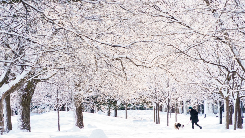A woman walks her dog under snow-covered trees in a park during the COVID-19 pandemic in Montreal, on Thursday, February 25, 2021. THE CANADIAN PRESS/Paul Chiasson