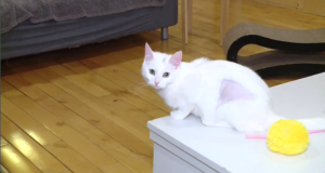 WATCH: Jaden Lee-Lincoln learns about the cats available for adoption at Excalipurr Cat Cafe and if animal adoption is the right fit for you.