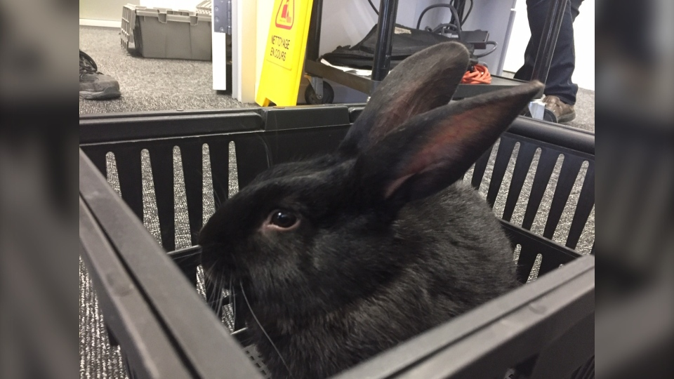 Library bunny
