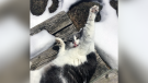 Picture This: Pets Playing in the Snow
