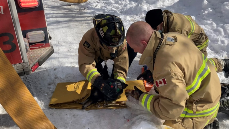 Ottawa fire provides care to a dog rescued from a fire at a home on Lepage Avenue. (Photo courtesy: Ottawa Fire Service)