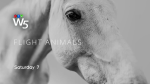 w5 promo board horses