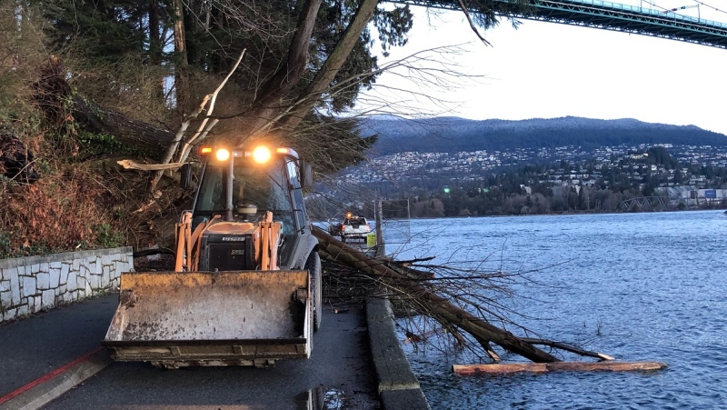 The Vancouver Park Board says a fallen tree has closed a section of the Stanley Park seawall on Feb. 26, 2021. (Vancouver Park Board/Twitter)