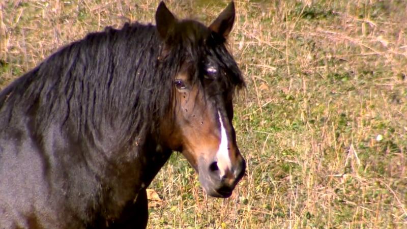 Jann Arden on Canada's 'sinister' horse exports