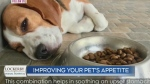 Ways to improve your sick pet's appetite