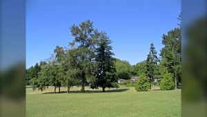 Riverview Park is seen in this photo from the City of Vancouver website.