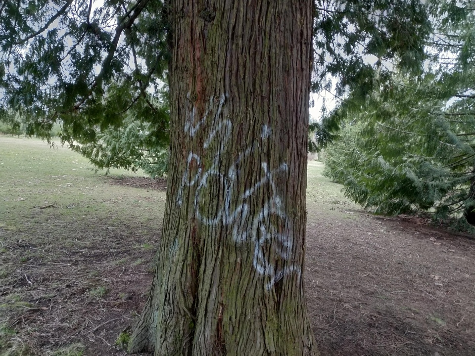 Several photos of the racist graffiti were shared on Reddit. (Gordon Hawkins)