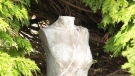 Beheaded statue makes international news