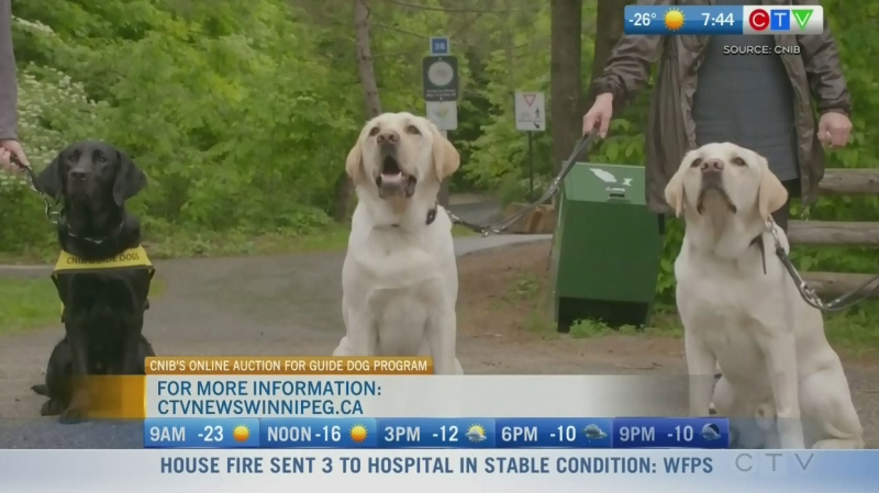 315 per cent spike in guide dog applications: CNIB