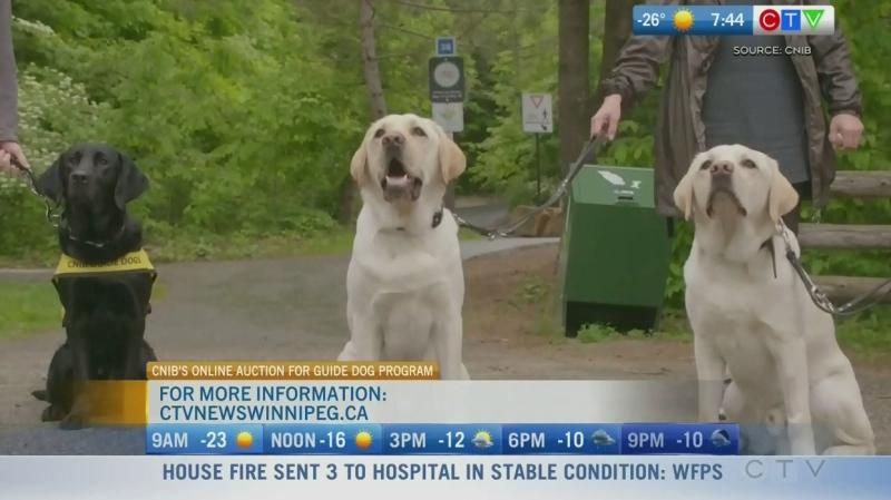 315 per cent spike in guide dog applications: CNIB