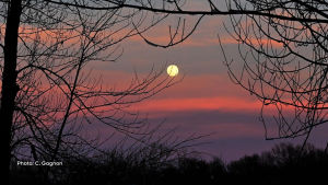 Full moon and sunset at Petrie island. (C. Gagnon/CTV Viewer)