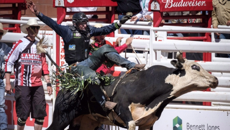 Jordan Hansen, of Ponoka, Alta., comes off Black Bart during bull riding rodeo action at the Calgary Stampede in Calgary, Alta., Saturday, July 7, 2018. THE CANADIAN PRESS/Jeff McIntosh