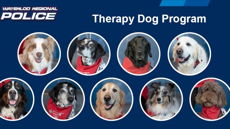 The therapy dogs working with WRPS through a pilot project (Supplied: WRPS)