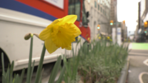 The Last Word: Sign of spring