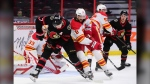 Ottawa Senators left wing Brady Tkachuk (7) fights for the puck with Calgary Flames defenceman Christopher Tanev (8) during first period NHL action in Ottawa on Monday, March 1, 2021. THE CANADIAN PRESS/Sean Kilpatrick