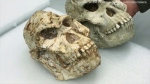Scientists used a particle accelerator to learn more about Little Foot, a 3.67-million-year-old Australopithecus fossil.