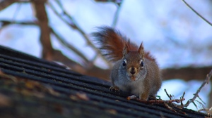 Hey! get off my shed. Photo by Raylene Blonski.