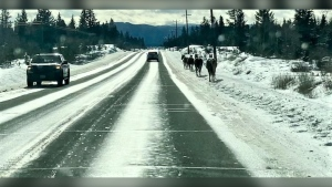 A photo posted on social media by the B.C. Conservation Officer Service shows a line of horses on Highway 97 on Monday