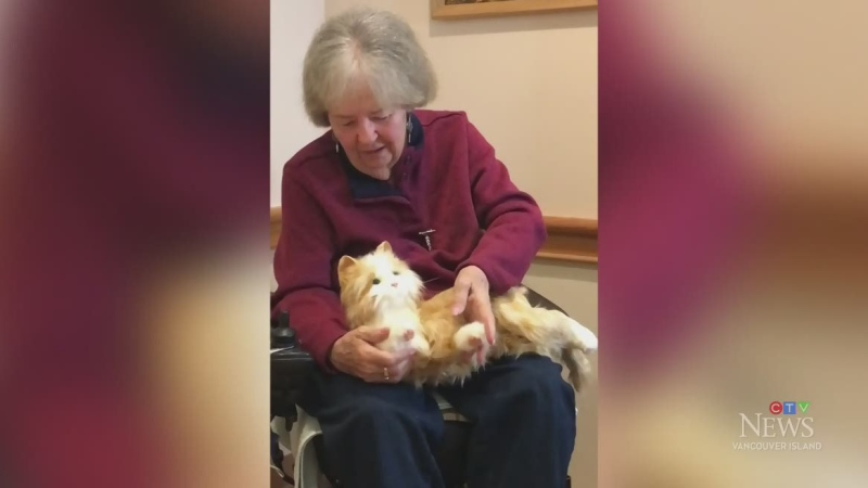 Robotic pets coming to some island care homes