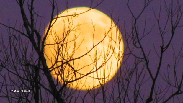 A beaming moon through the trees. (Pamela/CTV Viewer)