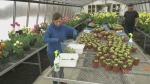 Kingston greenhouse used to help charity