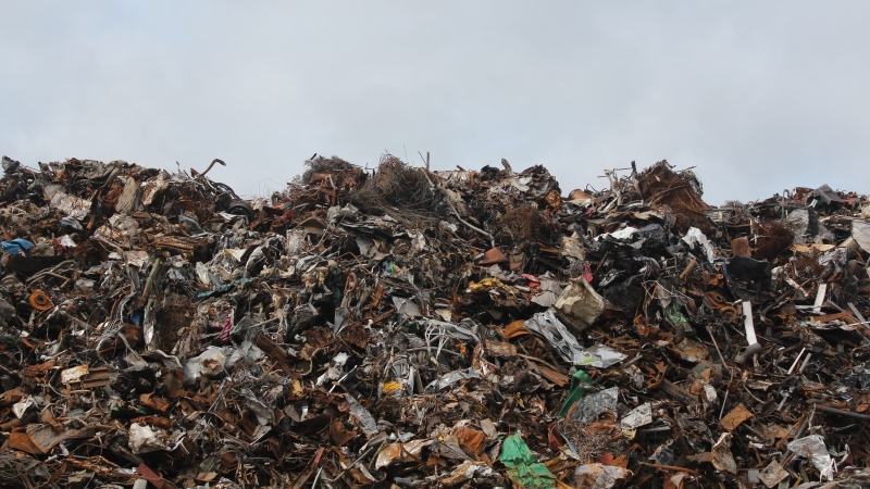 A United Nations report estimates that 17 per cent of the food produced globally each year is wasted. (Emmet / Pexels)