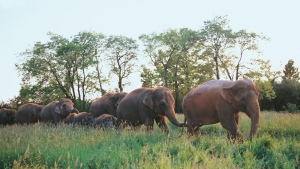 Elephants at the African Lion Safari can be seen in this photo. (African Lion Safari website)