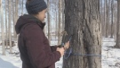 Sugar shack looks to syrup sales to stay afloat