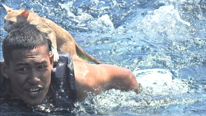 Sailor jumps into sea to save 4 cats from sinking