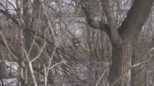 Human remains discovered in city