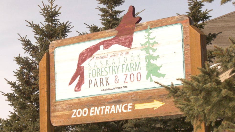 At the start of the pandemic, the Saskatoon Forestry Farm Park & Zoo closed down to the public for several months but reopened in July. (Miriam Valdes-Carletti/CTV News)