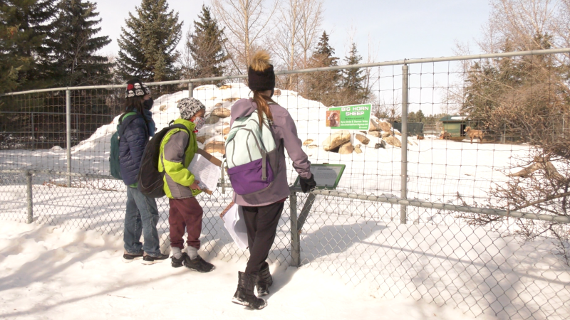 The Zoo is now seeing a steady flow of visitors from families and school trips from the generally good weather. (Miriam Valdes-Carletti/CTV News)
