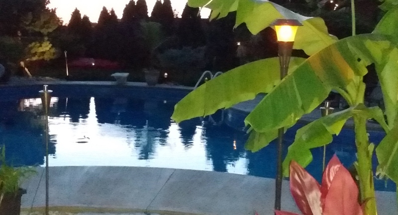 Tropical plants are seen surrounding a pool in Chatham, Ont. (Source: Dave Polowick)