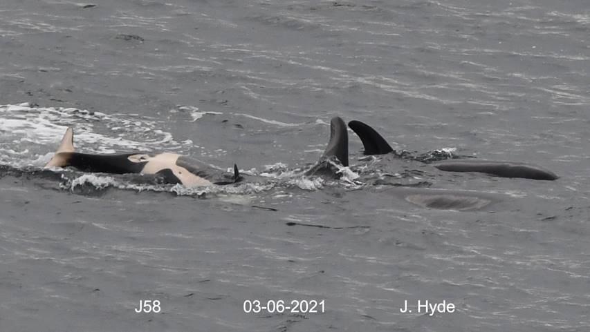 orca j58