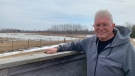 Tundra swans can be seen behind Ron Casier, manager of the Aylmer Wildlife Management Area, on Wednesday, March 10, 2021.  (Reta Ismail / CTV News)