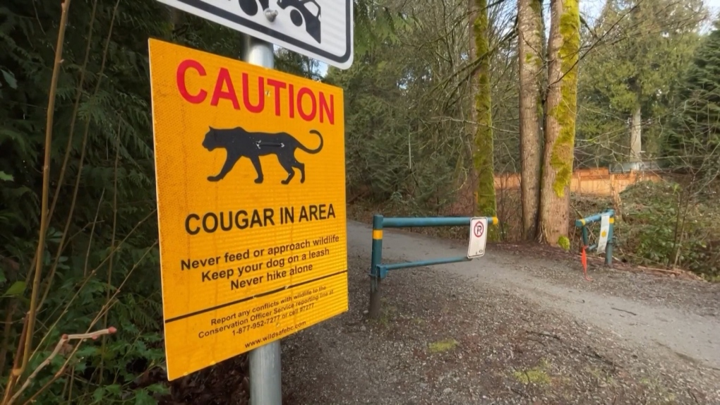 Warning for pet owners after cougar attack