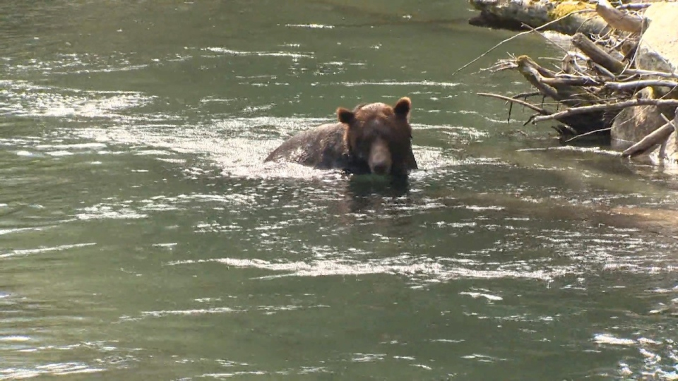 A North Island First Nation is hoping to attract visitors to its wildlife and cultural tours: (CTV News)