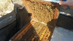 Challenges for honey producers