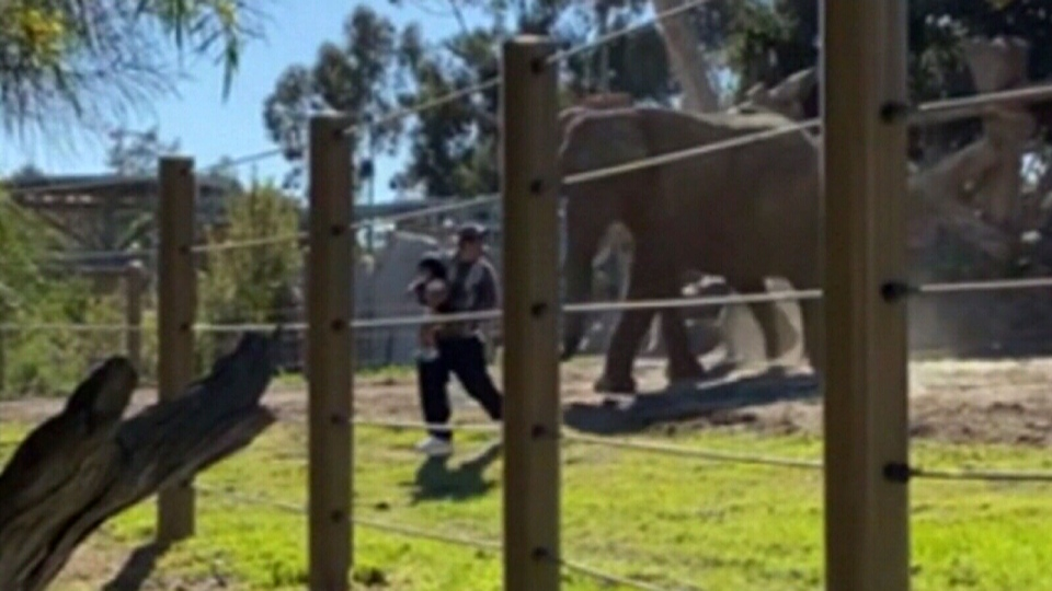 Man breaks into elephant enclosure