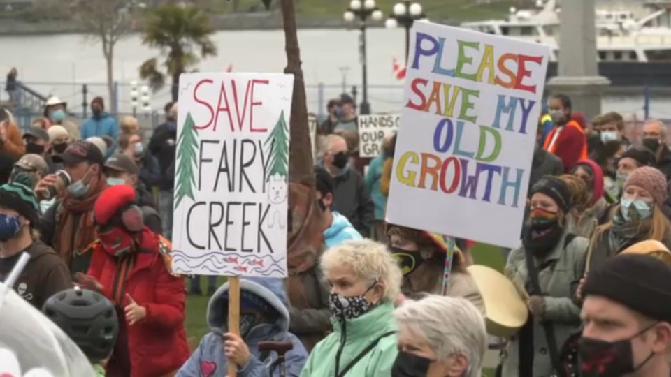 Old-growth protest