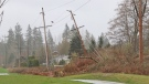 A tree took out power lines in Langley's Walnut Grove neighbourhood on Sunday, March 28, 2021. Environment Canada issued wind warnings for Metro Vancouver and Greater Victoria as a strong storm made its way through the South Coast. (CTV)