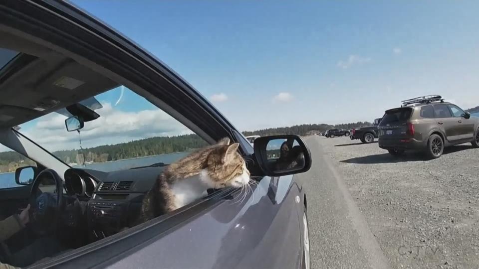 Sawatsky Sign-Off- Car Cat