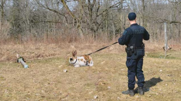London police announce new animal response team that uses specially trained rabbits