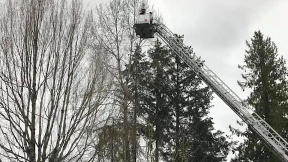 Crow rescued in Surrey