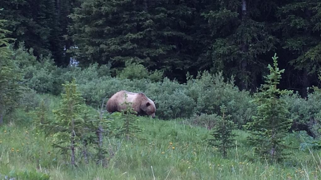 Grizzle Bear, bear