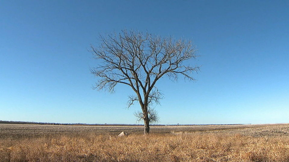 CTV National News: Risk of drought in prairies